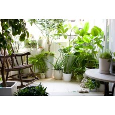 Irrigazione piante da interno faregiardini for Piante da interno profumate