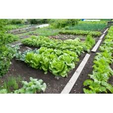 Irrigazione per orto faregiardini for Microirrigazione orto